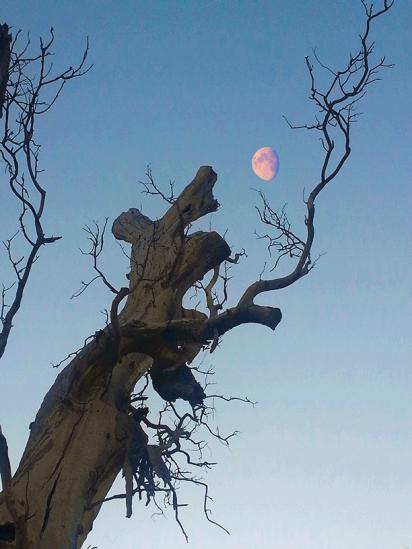 tree_moon