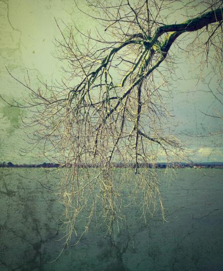 tree_droop
