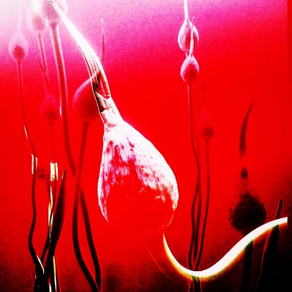 shakahari_flowers