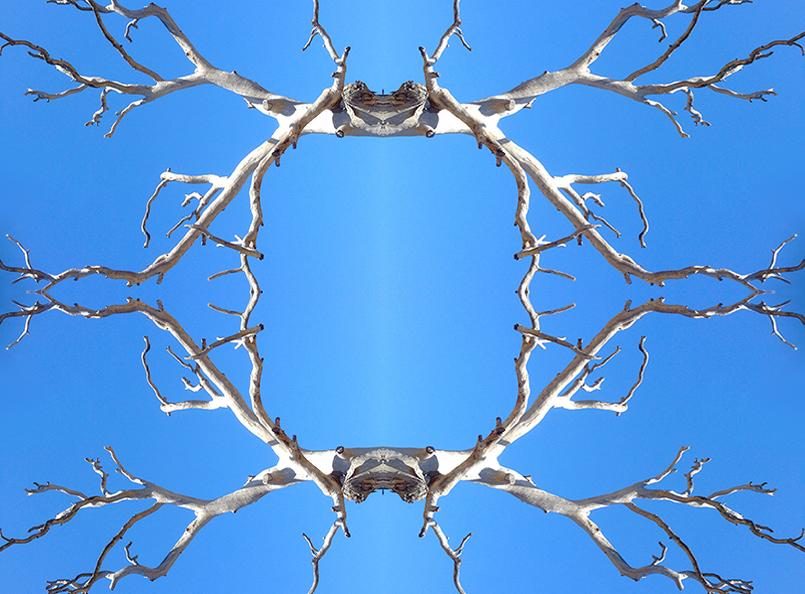 dead_gum_symmetry